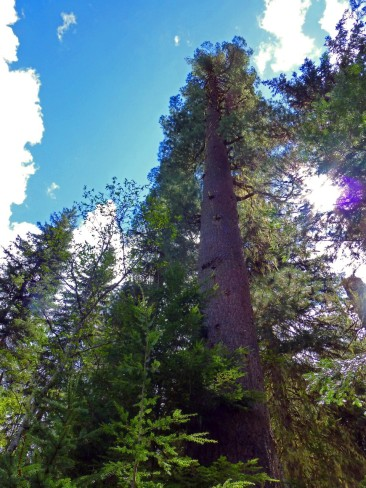 Old Growth White Pine-Cataract Roadless Area